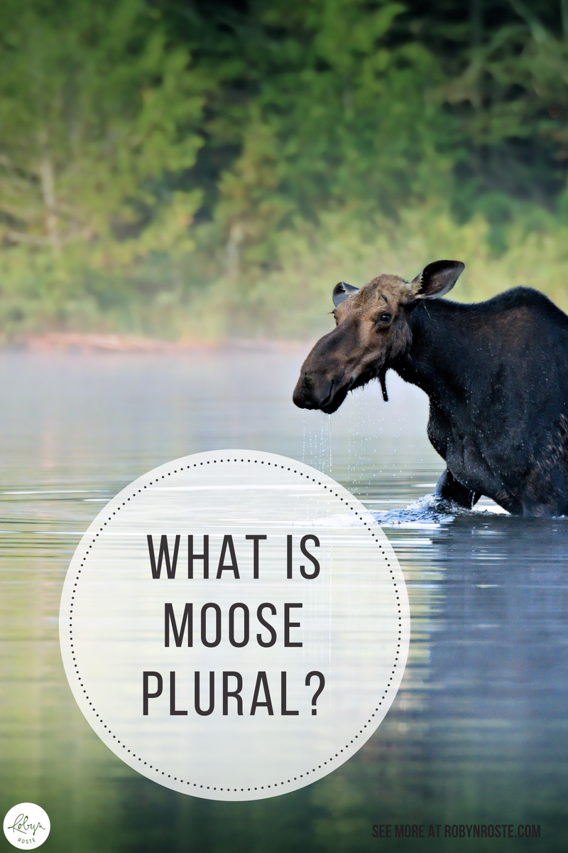 I've been thinking about moose and I thought we could talk a little bit about grammar. I know you're wondering why the plural of moose isn't meese, right?