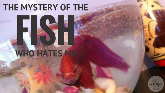 THE MYSTERY OF THE FISH WHO HATES ME